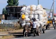 Seems heavy for a donkey…
