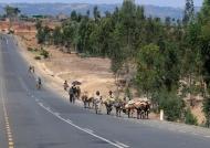 Road Traffic