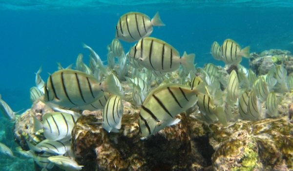 Shoal of Convict Tang