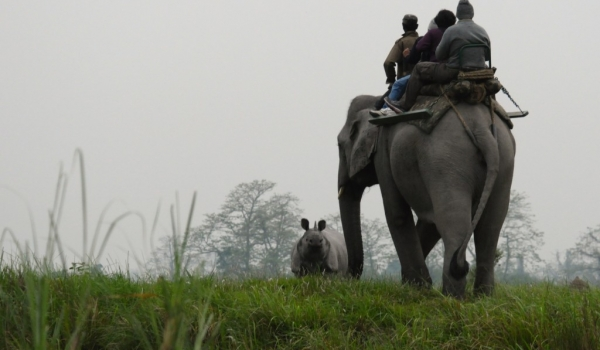 Early elephant ride for Rhinos