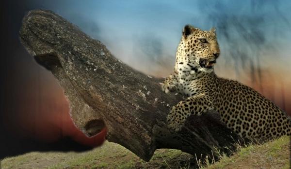 Erudite Leopard