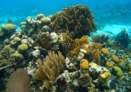 Underwater South Water Caye