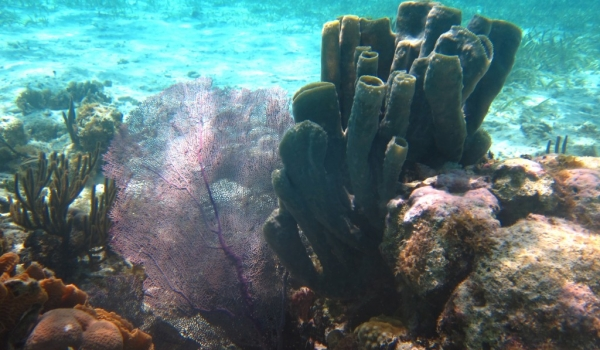 Sea Fan and Tube Sponges