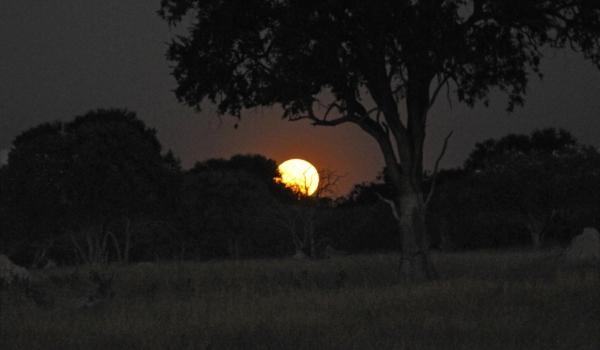 African Full Moon