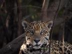 Pantanal – Mammals