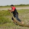 llanos-giant anaconda