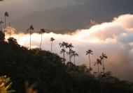 Caribbean Area