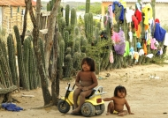 Wayuu children