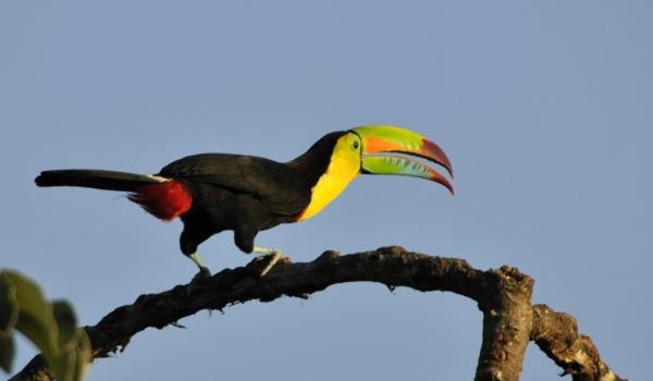 Colombia – Birds