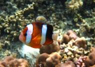 Bunaken – Sea Life