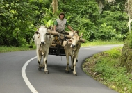 North Sulawesi – People