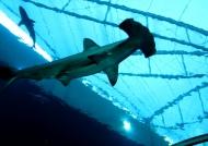 Sharks Tunnel