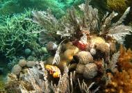 Soft & Hard Corals