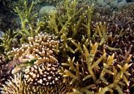 Variety of Hard Corals