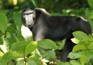 So noisy macaques!