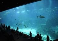 World's largest screen-36m