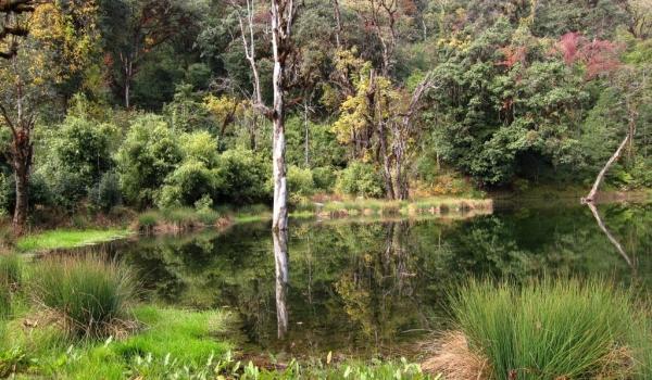 Lampari Botanical Park