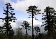 Dochula Pass facing Himalaya
