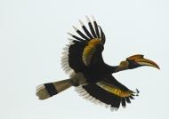 India – Birds – 1