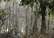 Pench N.P. – Nature spleen