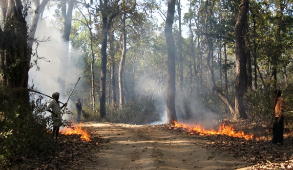 Fire to clean Kanha N.P. track