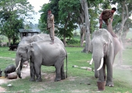 Taking care of elephants
