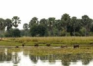 Shire River from Mwuu lodge