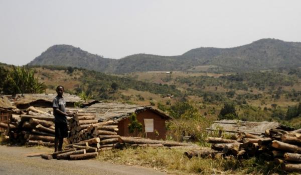 Viphya – Deforestation