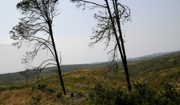 Viphya – Desolation