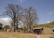 Baobab – center of  the village