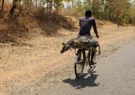 Taxi bike for alive pig….