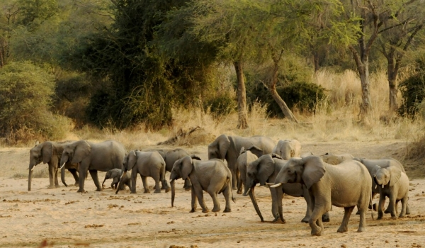 Gathering in a dried river bed