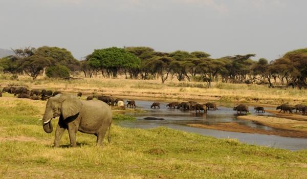 Wildlife near the river