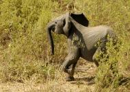 Running away into the bush