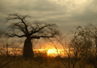 Sunset on a Baobab