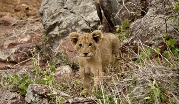 Small cub