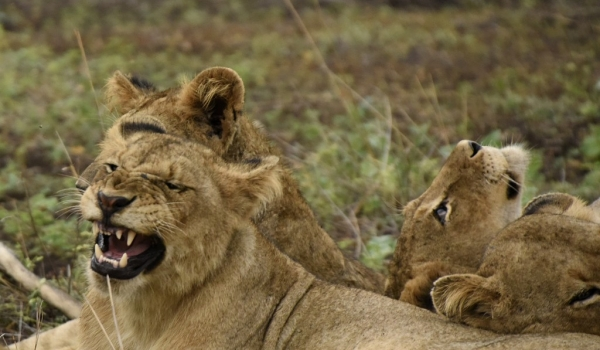 Yawning competition !