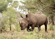 White Rhino max. 3,6 tons