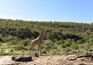 Giraffe at work – checkpoint 1