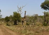Giraffe – checkpoint 2