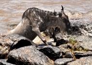 Migration-Rocky river