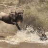 & splashing into the river