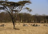 Serengeti North landscape
