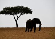 …in the Serengeti Plain