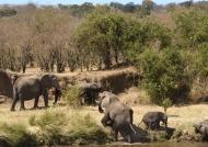 Elephants reaching the shore