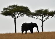 Elephant, near Kenya border…