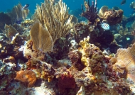 Underwater scenery