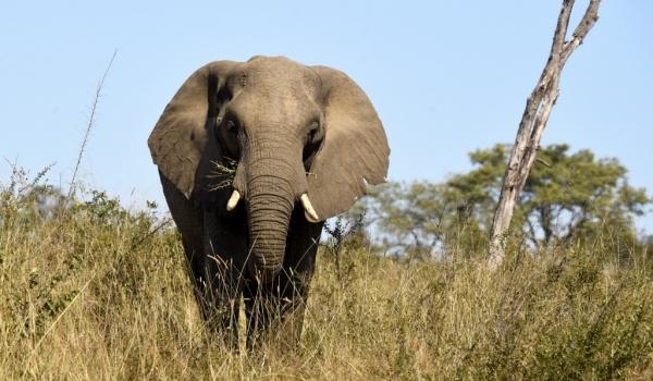 Elephant coming closer