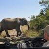 Elephant taking the priority