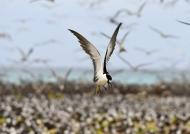 …. up to 1.5 million birds